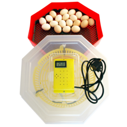 Clocitoare Incubator electric cu termometru digital